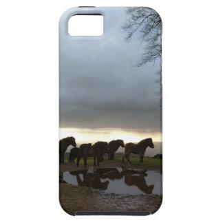 Potros de Exmoor iPhone 5 Case-Mate Cárcasa