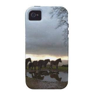 Potros de Exmoor Vibe iPhone 4 Carcasas