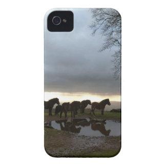 Potros de Exmoor iPhone 4 Case-Mate Protector