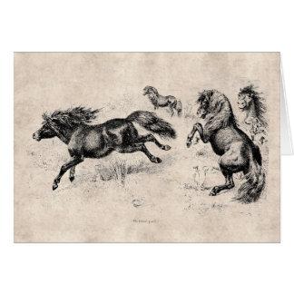 Potros de Shetland del vintage - caballo 1800's y  Tarjetón
