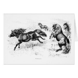 Potros de Shetland del vintage - caballo 1800's y  Felicitaciones