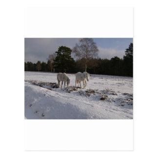 Potros en la nieve postales