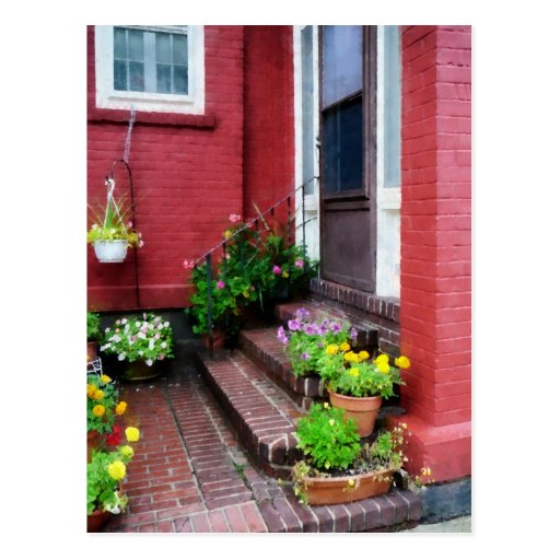 Pots of Flowers By Door Postcard