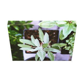 Pots of green plants canvas print