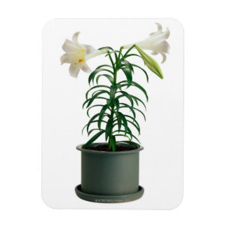 Potted Easter Lily Magnet