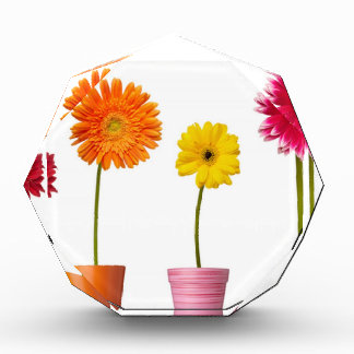 Potted flowers award