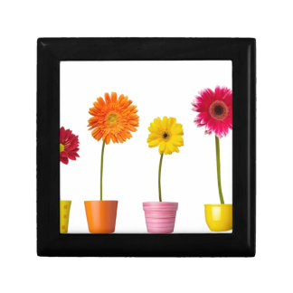Potted flowers gift box