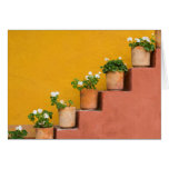 Potted flowers on staircase card