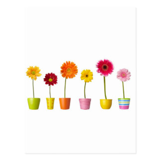 Potted flowers postcard