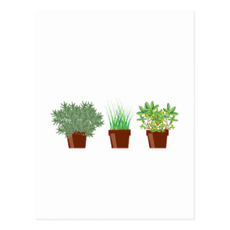 Potted Herbs Postcard