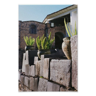 potted plants in cusco posters
