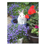 Potted rabbiit post cards
