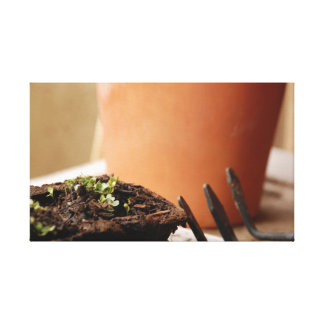 Potted Seedling Stretched Canvas Prints