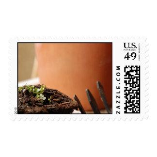 Potted Seedling Postage
