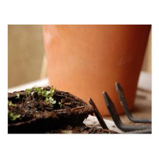 Potted Seedling Postcard