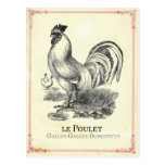 Poulet Chicken Post Cards