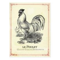 Poulet Chicken Postcard