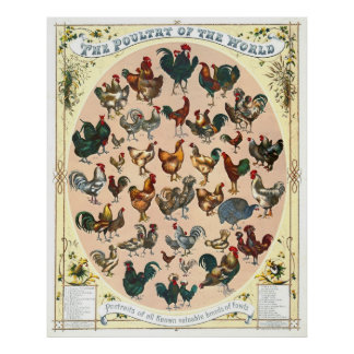 Poultry Breeds 1868 Poster