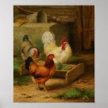 Poultry Feeding in a Barn Print