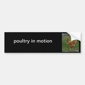 poultry in motion bumper sticker