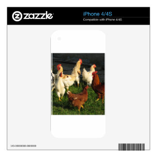 Poultry iPhone 4S Skins