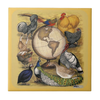 Poultry of the World Small Square Tile