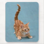 Pouncing Kitten Mouse Pad