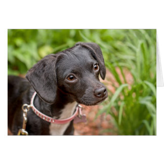 Pound Puppy Rescue Delilah Greeting Cards