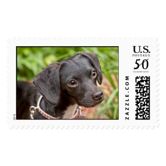 Pound Puppy Rescue Delilah Postage