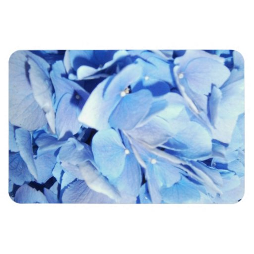 Powder Blue Hydrangea Flexible Magnet