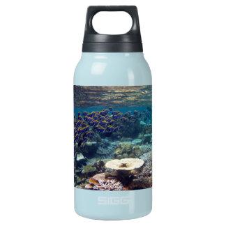 Powder Blue Surgeon Fish 10 Oz Insulated SIGG Thermos Water Bottle