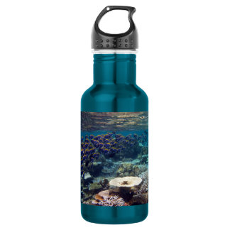 Powder Blue Surgeon Fish 18oz Water Bottle