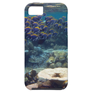 Powder Blue Surgeon Fish iPhone 5 Covers