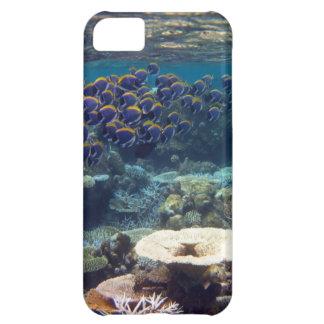 Powder Blue Surgeon Fish Case For iPhone 5C