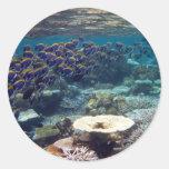 Powder Blue Surgeon Fish Classic Round Sticker