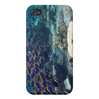 - Powder Blue Surgeon Fish Cover For iPhone 4