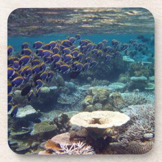 Powder Blue Surgeon Fish Drink Coaster