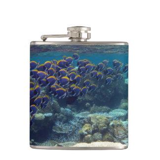 Powder Blue Surgeon Fish Hip Flasks