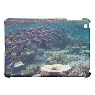 - Powder Blue Surgeon Fish iPad Mini Case