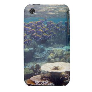 Powder Blue Surgeon Fish iPhone 3 Case-Mate Cases