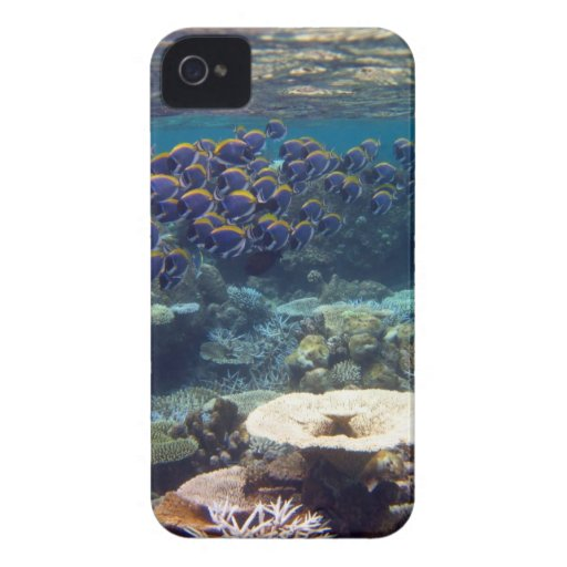 Powder Blue Surgeon Fish iPhone 4 Cover