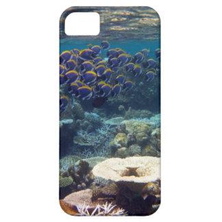 Powder Blue Surgeon Fish iPhone 5 Case