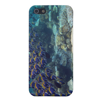 - Powder Blue Surgeon Fish iPhone SE/5/5s Cover