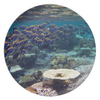 Powder Blue Surgeon Fish Plates
