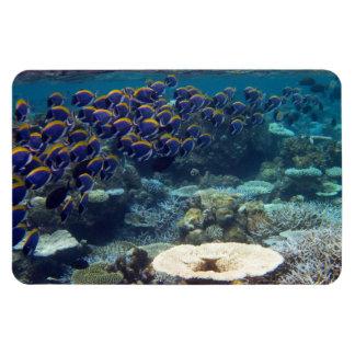 Powder Blue Surgeon Fish Rectangular Photo Magnet