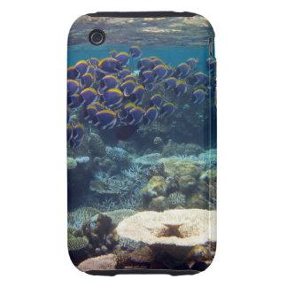 Powder Blue Surgeon Fish Tough iPhone 3 Cases