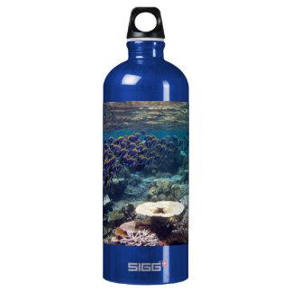 Powder Blue Surgeon Fish Water Bottle