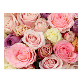 Powder colored roses by Therosegarden Postcards