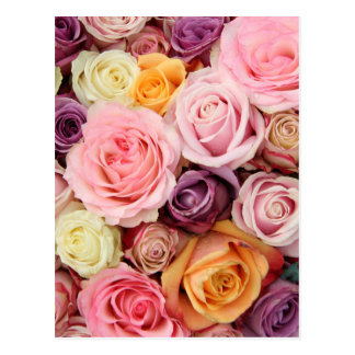 Powder colored roses by Therosegarden Post Card