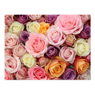 Powder colored roses by Therosegarden Post Cards